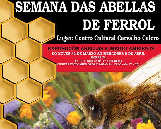 AGA propone trampas contra la velutina y presenta la Semana de las Abejas de Ferrol
