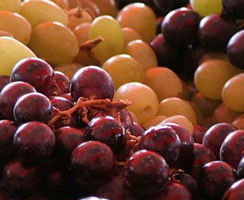Cooperativas Agro-alimentarias de España estima en 42 millóns de hectolitros a produción de viño e mosto