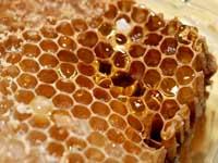 El sector apícola, preocupado por la parálisis del mercado de la miel solicita medidas de defensa de la apicultura española