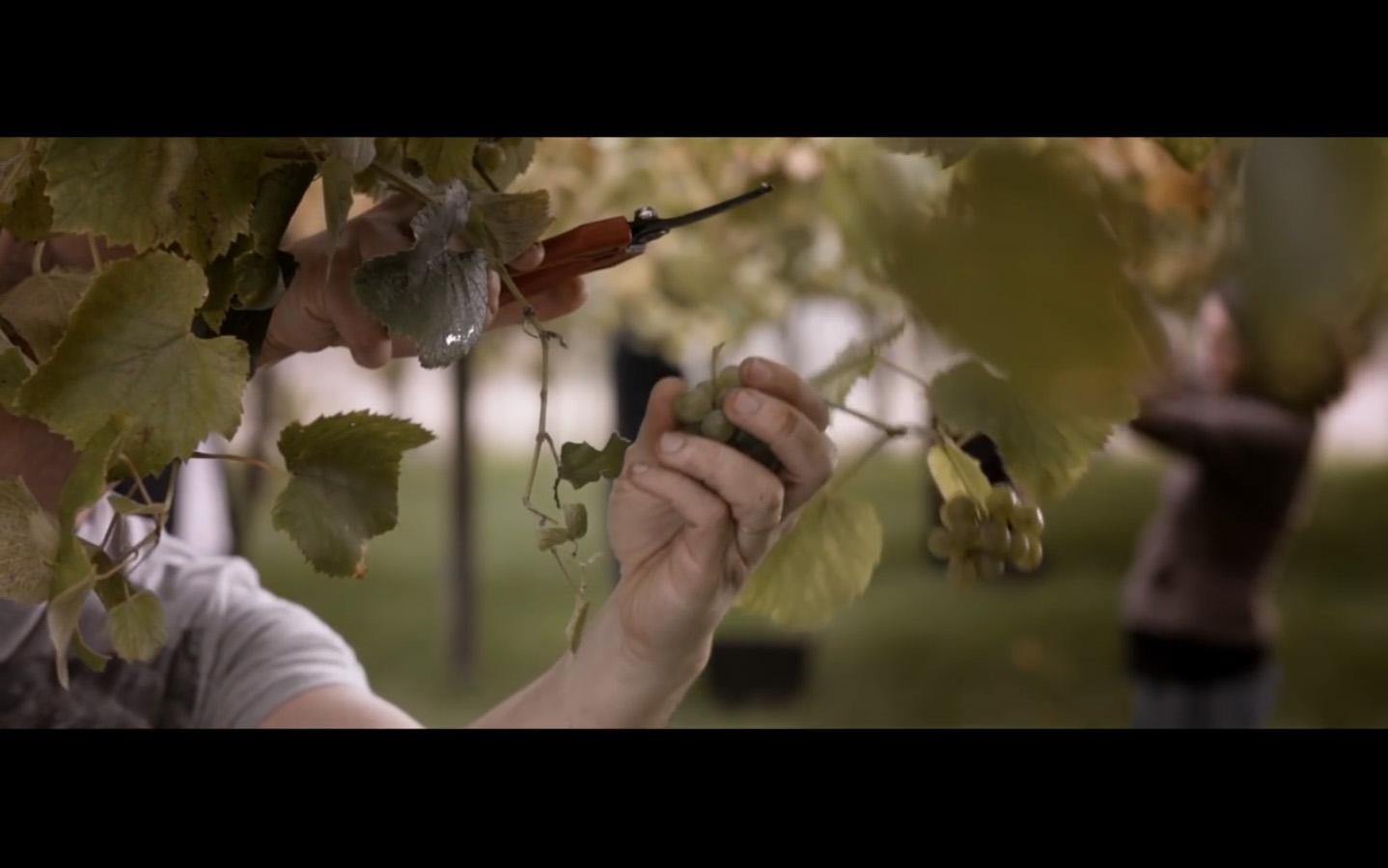 Cambados será a Cidade Europea do viño 2017