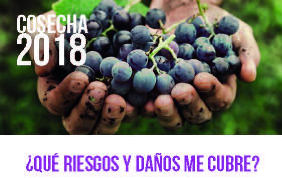 Comienza la campaña de seguros de viñas