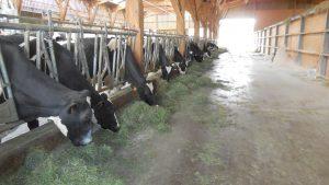 20180813_EuroDairy_Rhone-Alpes-vacas