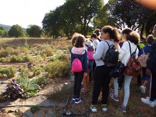 Sesenta escolares de Vilalba aprenden cooperativismo en Milhulloa