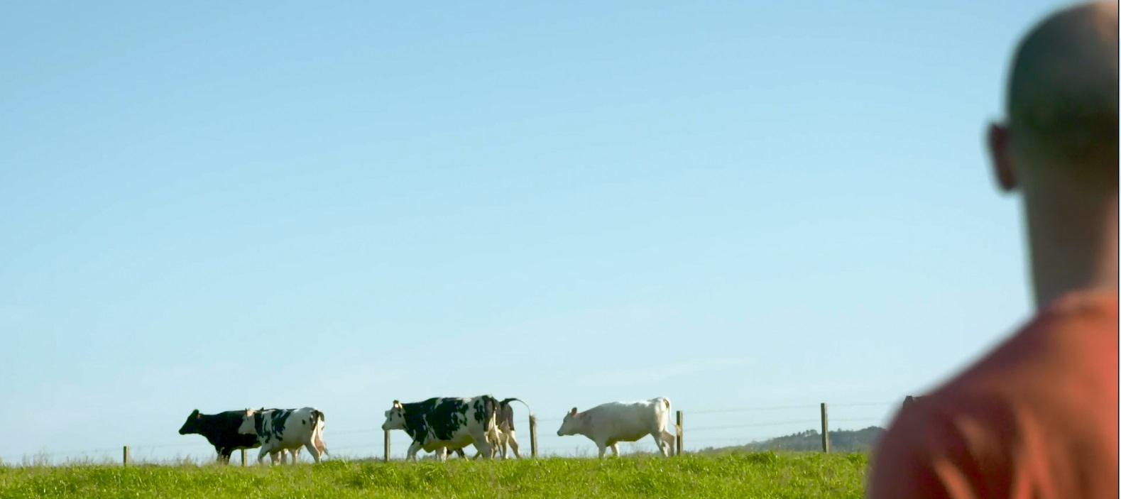 Gandeiros e industrias lácteas: Compromiso coa sostibilidade